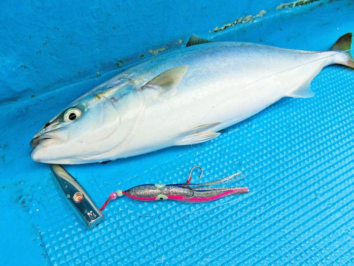 11月でもオフショアジギングではまだまだ青物釣れます