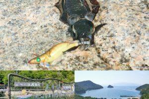 10月上旬家島諸島でエギング|アオリイカの釣果と西島への行き方を紹介