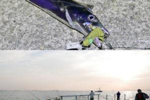 2019年10月下旬甲子園浜へタチウオルアー釣行|低活性時のウキ釣りに負けない釣り方も紹介
