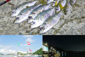 2019年10月下旬の坊勢島アジングで25cmUPを含む好釣果!デイゲームのコツも紹介