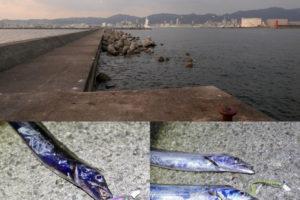2019年11月1日神戸和田防タチウオルアー釣行|大阪湾での混雑の避け方と2種類のワームの使い分けについて紹介