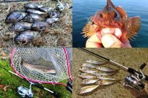 12月の初冬にライトルアーフィッシングで釣れる魚種とその釣り方