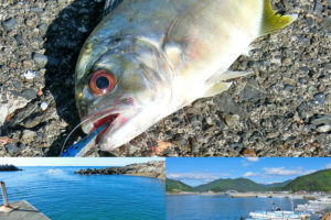 和歌山南紀メッキアジング釣行|ポイントの絞り方と7種類のルアーを使った結果を紹介