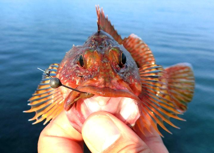 12月になるとルアーでの穴釣りは数・型共ピークに