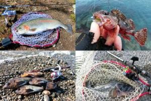 1月の真冬にライトルアーフィッシングで釣れる魚種とその釣り方