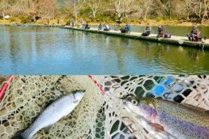 1月に嵐山フィッシングエリアへ釣行|休日・混雑時のスレたトラウトを釣る為に必要な3つの注意点とは