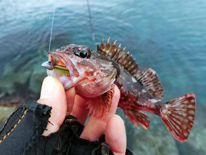 1月になるとルアーでの穴釣りは高難易度に