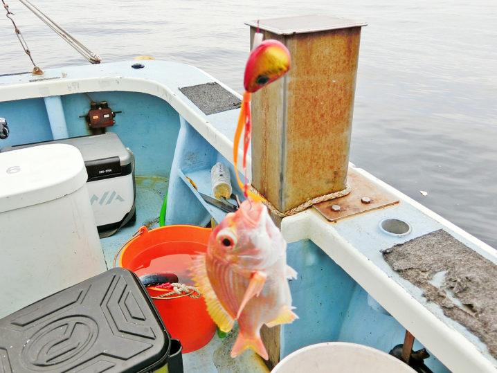 2匹のレンコ鯛が釣れるものの真鯛は釣れず2