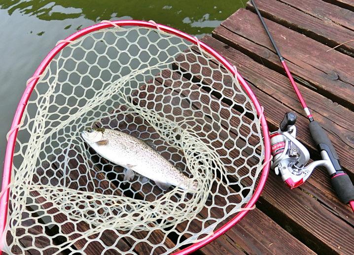 なごみの湖での釣果