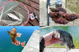 2月の晩冬にライトルアーフィッシングで釣れる魚種とその釣り方