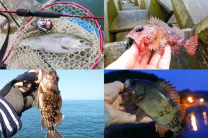 3月の初春にライトルアーフィッシングで釣れる魚種とその釣り方