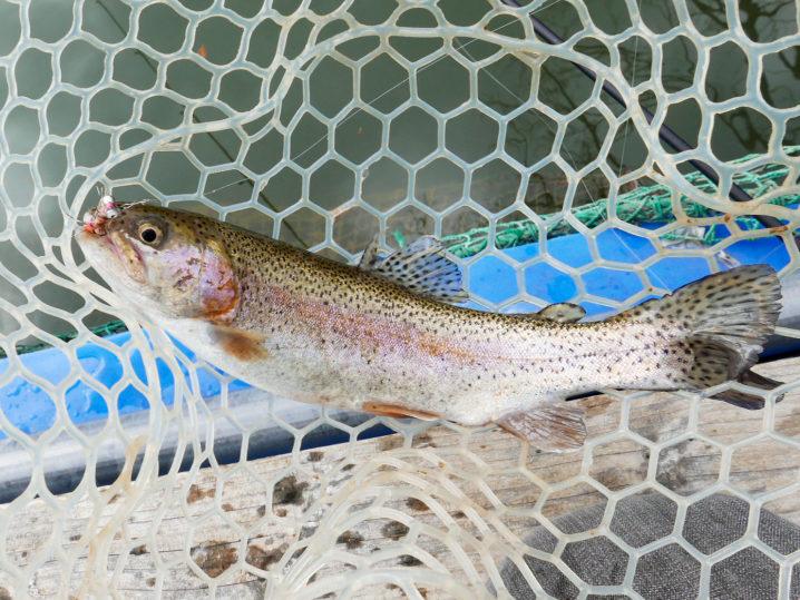 釣れるアクションは超スローリトリーブかカーブフォール