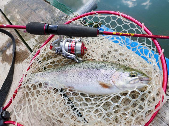 40センチくらいのニジマスも釣れました2