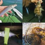 5月の晩春にライトルアーフィッシングで釣れる魚種とその釣り方