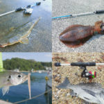 6月の梅雨にライトルアーフィッシングで釣れる魚種とその釣り方