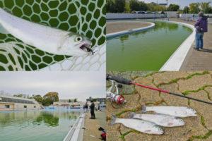 大阪の管理釣り場|岸和田フィッシングパークで一人爆釣となったヒットパターンとルアーを紹介