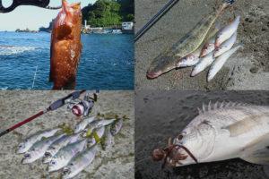 7月の夏にライトルアーフィッシングで釣れる魚種とその釣り方