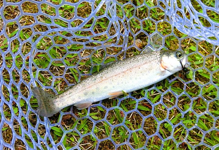 管理釣り場もまだ釣れる