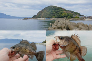 3月下旬福井デイメバリング|低水温・低活性・チビメバルだらけの中良型メバルを釣る事ができた理由を紹介
