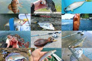 ライトルアーフィッシングで釣れる魚を紹介|初心者向け入門記事一覧