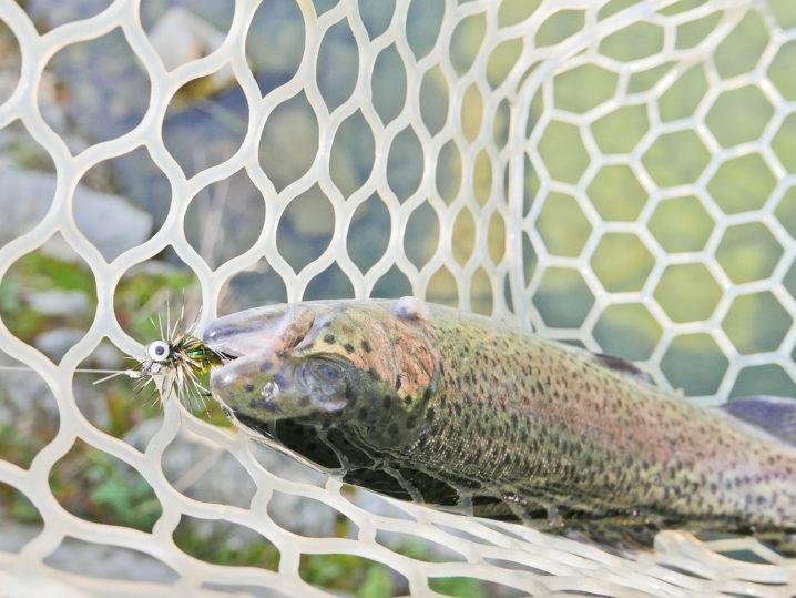管理釣り場初心者にはフェザージグがおすすめ!