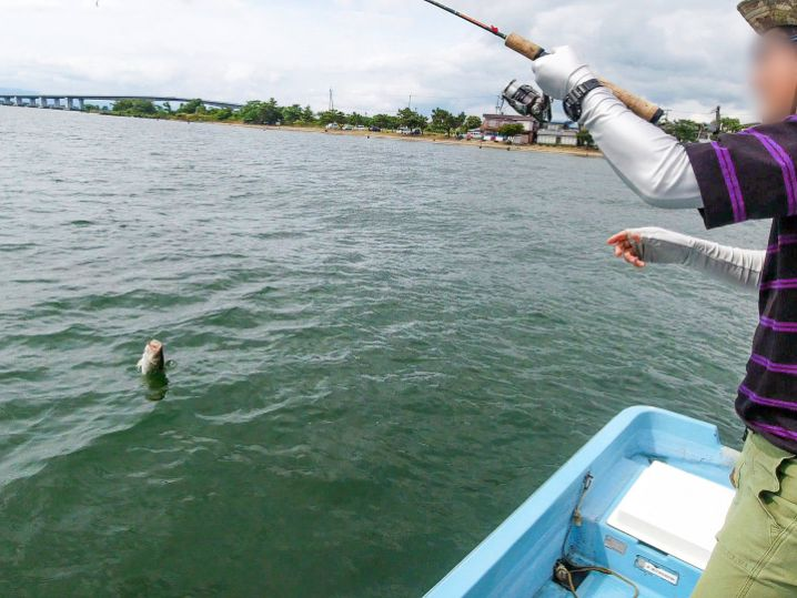 真野沖のウィードエリアで釣れ釣れさんにキッカーフィッシュが!