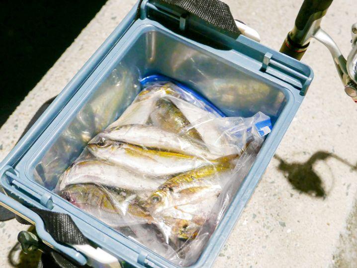 魚を入れたらこんな感じです