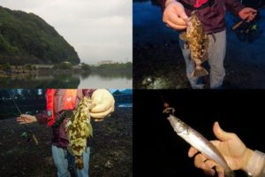 6月上旬淡路島へ根魚・チニング釣行で五目達成したルアーとは|根魚が釣れるタイミングも紹介