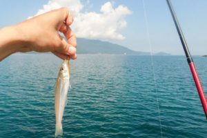 6月上旬福井県敦賀にキス釣り|ルアーとエサの釣れ方の違いを検証!当日のヒットパターンも紹介
