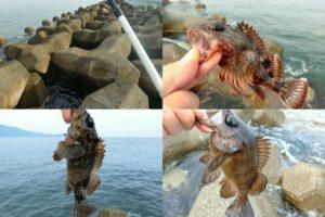 6月中旬福井でルアー釣り|スイミング穴釣りでガシラ・ソイが爆釣!23センチのメバルも釣れるルアーと釣り方を紹介