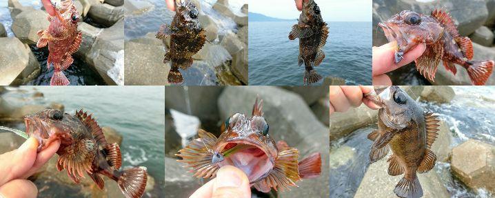 6月中旬福井でのスイミング穴釣り釣果