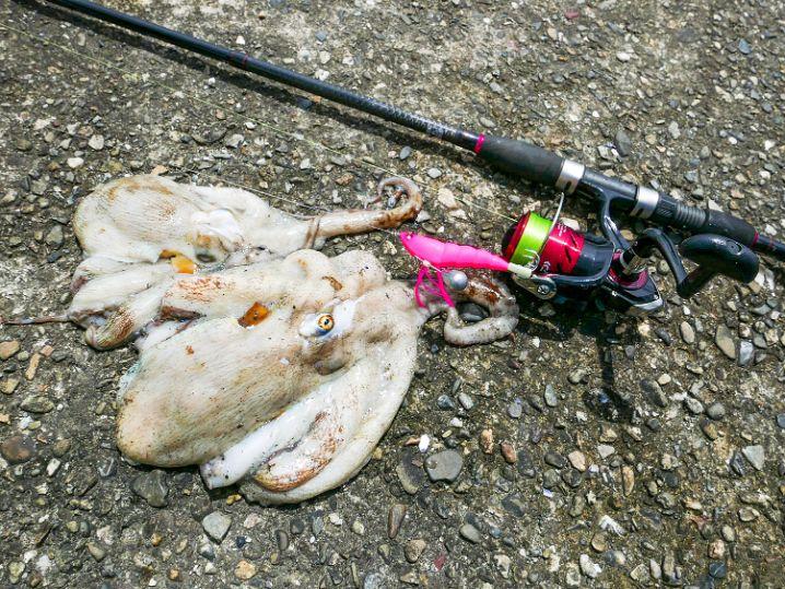 7月中旬大阪湾の沖堤防タコ釣りの釣果