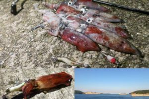 8月中旬坊勢島ケンサキエギングで好釣果|釣り方・ヒットルアー・初心者オススメのタックルを紹介