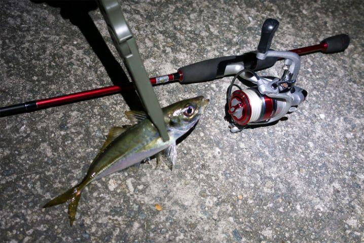 3gのキャロライナリグでさくっとアジが釣れました