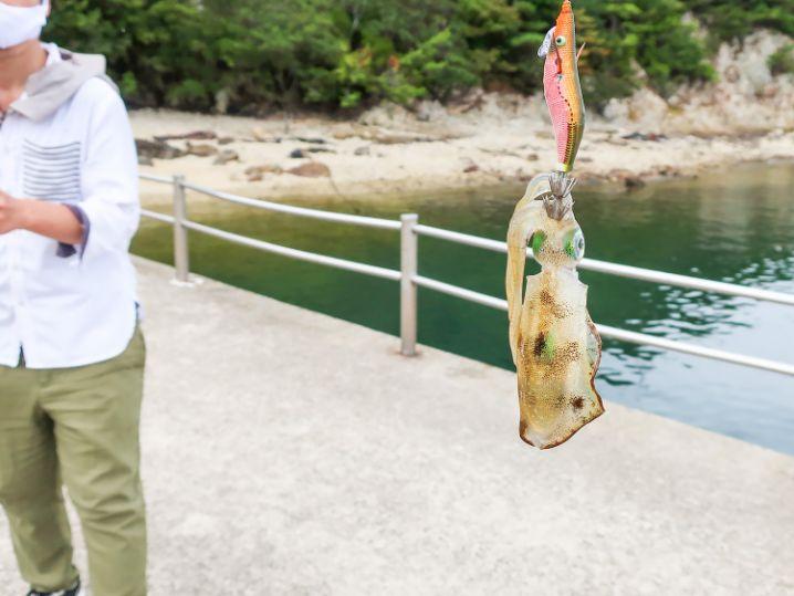 桟橋エリアに戻りニケさんがアオリイカをゲット!