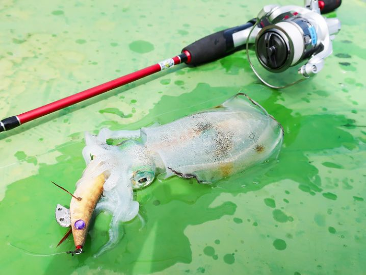 最後に本日最大のアオリイカを釣って終了