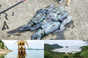 9月中旬家島諸島エギングでアオリイカ好釣果|人混みを避ける為のポイント選び方を紹介