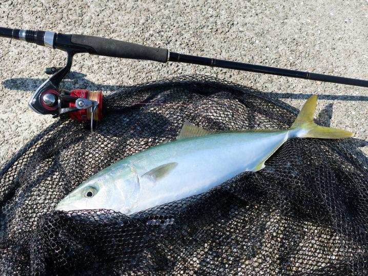 大阪近郊より混雑しない家島諸島でショアジギング|ポイント紹介と釣る為に大事な1つの事とは