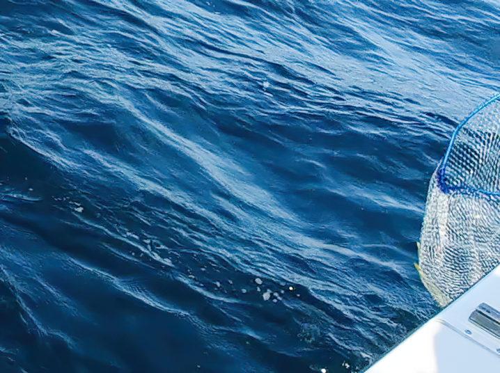 釣れ釣れさんがヒラマサを釣り上げる!2
