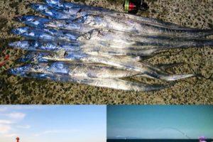 10月末の和歌山小浦一文字でタチウオ爆釣!釣れたポイント・ルアー・ヒットパターンを紹介