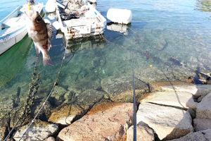 11月下旬坊勢島釣行|延べ竿メバリングの良い点・悪い点を紹介