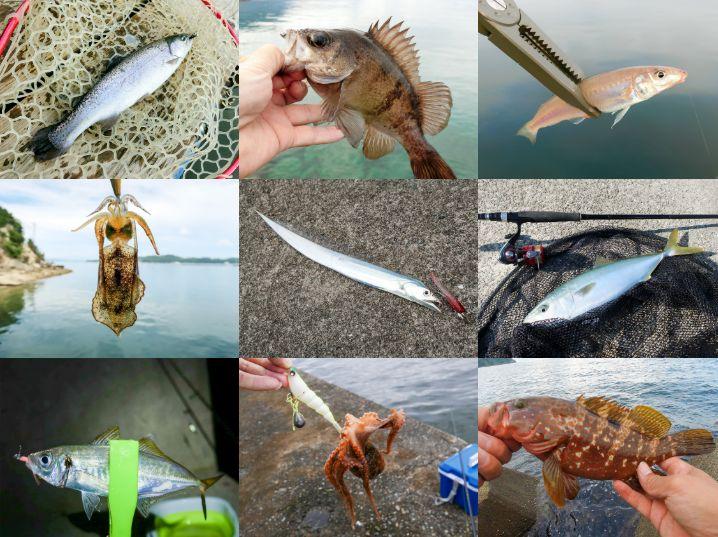 釣り動画(インスタグラム)一覧