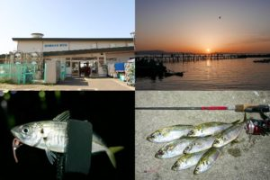 4月中旬小島養漁場でアジング|低水温・低活性のヒットパターンとルアーを紹介