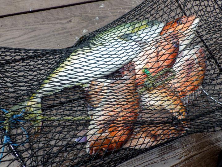 釣れた魚はどうするの?