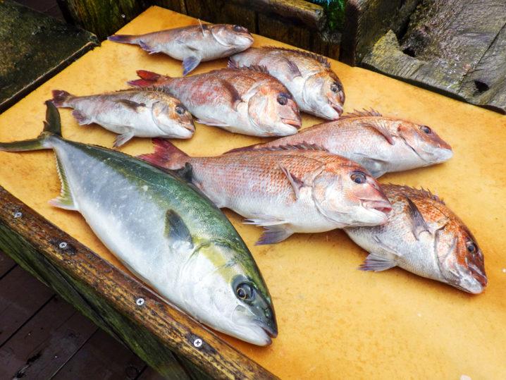 フィッシングレインボーではどんな魚が釣れるの?