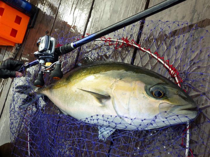 フィッシングレインボー(海上釣堀)の養殖魚って天然の魚と比べて美味しいの?