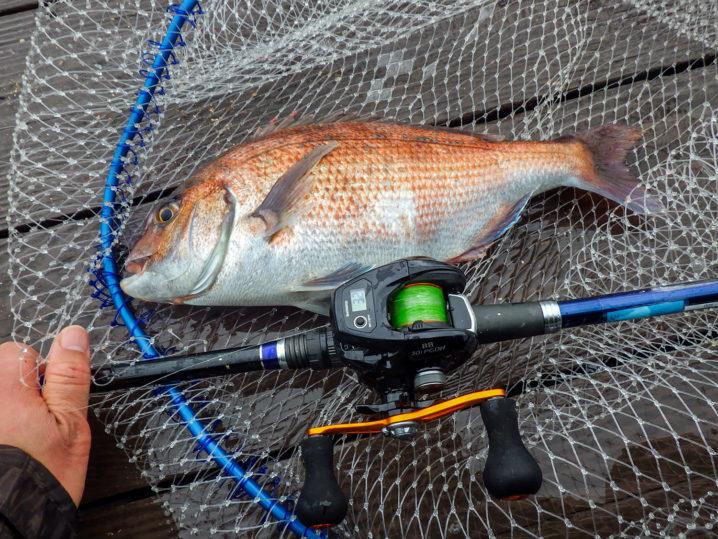 エサを青イソメに変更して真鯛を連続で釣り上げる!3