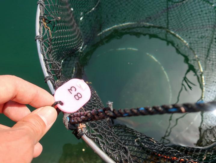 釣れた魚はスカリの中へ