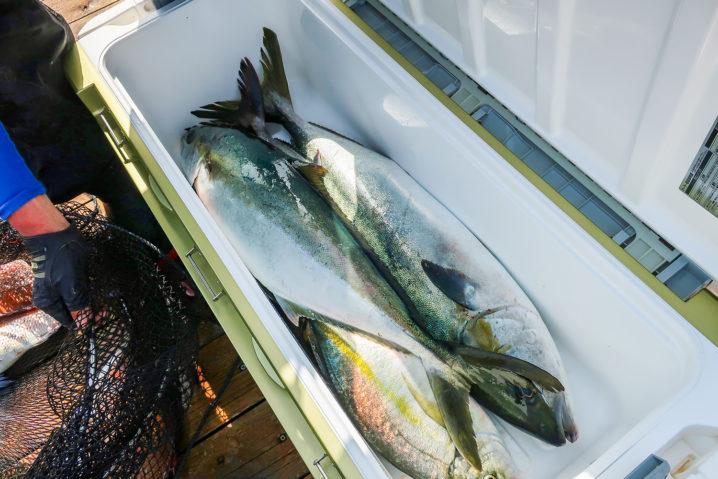 魚を持ち帰るには50L以上のクーラーボックスが必要