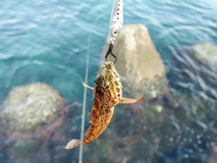 その後はメタルジグでアナハゼ・サバ・ガシラを釣る